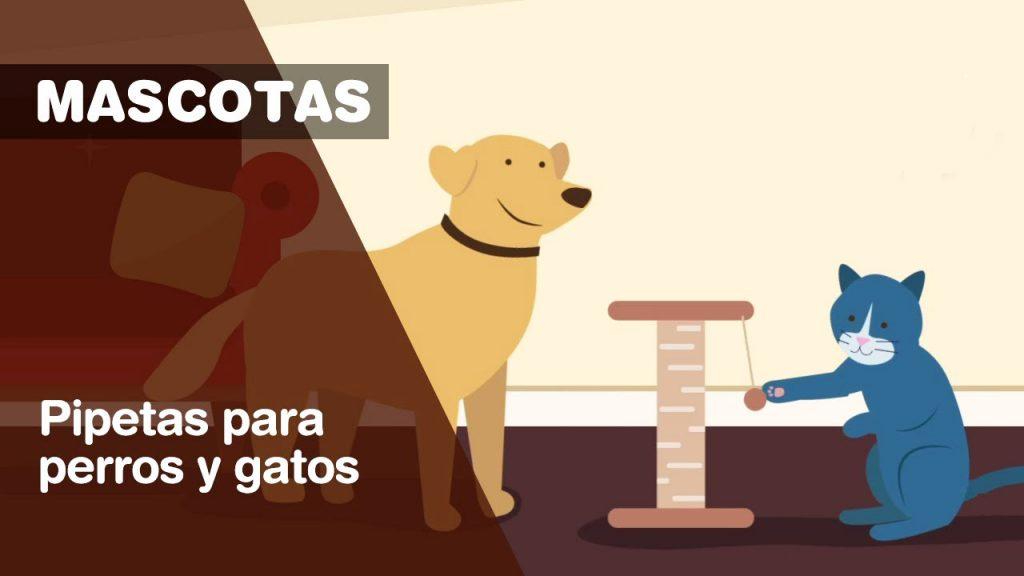 pipetas para gatos perros mercadona